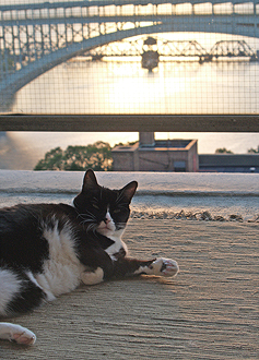 Puss n Bridge #2